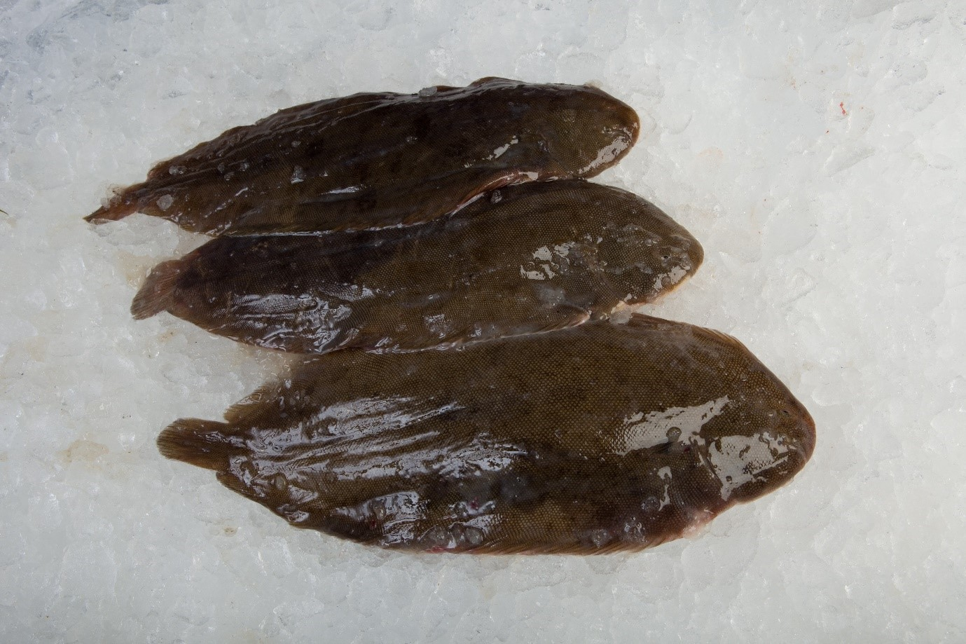 Fresh Dover Sole for a Flying Fish at Home delivery box