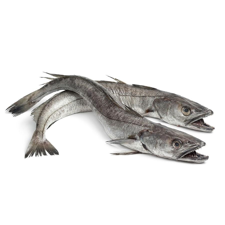 Hake Fish for a Flying Fish at Home box