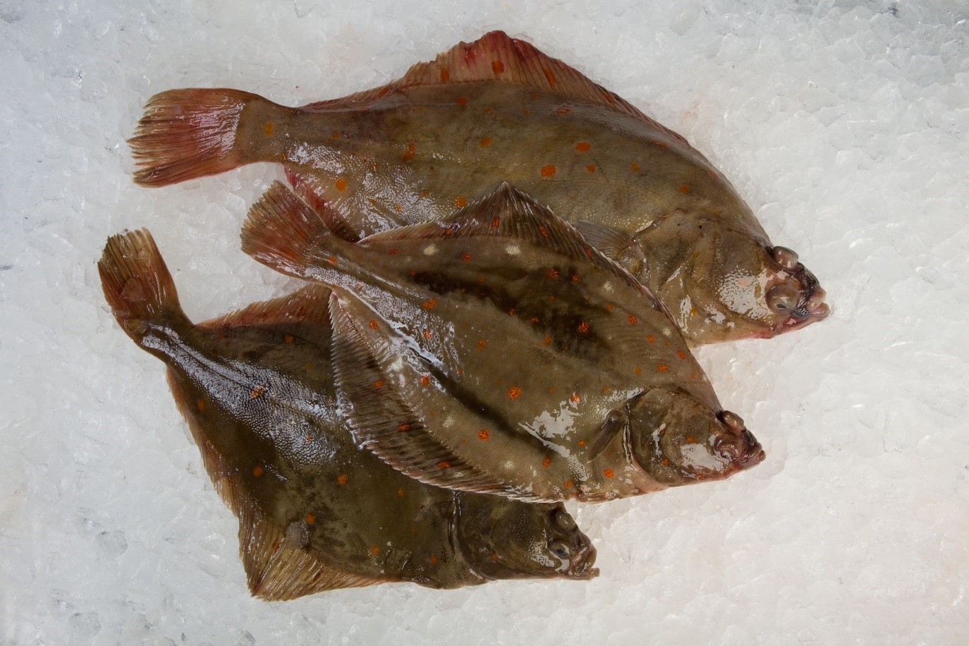 Plaice fish from a Flying Fish at Home delivery box