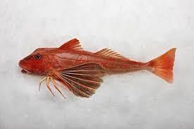 A Red Gurnard Fish for a Flying Fish at Home Delivery Box