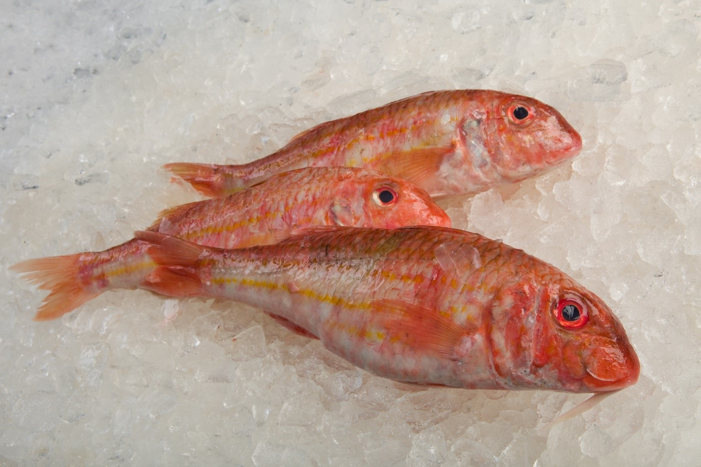 Red Mullet Fish ready for a Flying Fish Box